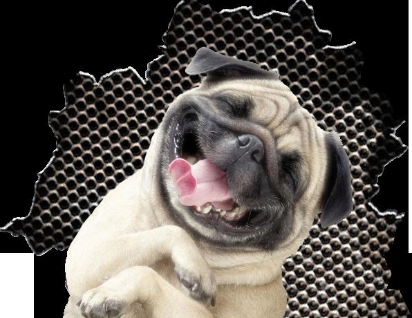 radosny pies